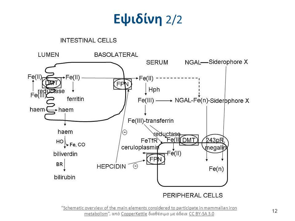 """Εψιδίνη 2/2 12 """"Schematic overview of the main elements considered to participate in mammalian iron metabolism"""", από CopperKettle διαθέσιμο με άδεια C"""