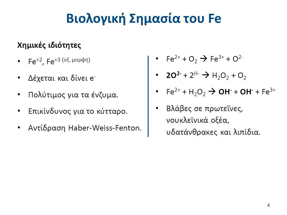Βιολογική Σημασία του Fe Χημικές ιδιότητες Fe +2, Fe +3 (οξ. μορφή) Δέχεται και δίνει e - Πολύτιμος για τα ένζυμα. Επικίνδυνος για το κύτταρο. Αντίδρα