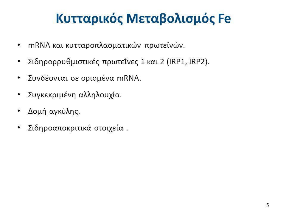Κυτταρικός Μεταβολισμός Fe mRNA και κυτταροπλασματικών πρωτεϊνών. Σιδηρορρυθμιστικές πρωτεΐνες 1 και 2 (IRP1, IRP2). Συνδέονται σε ορισμένα mRNA. Συγκ