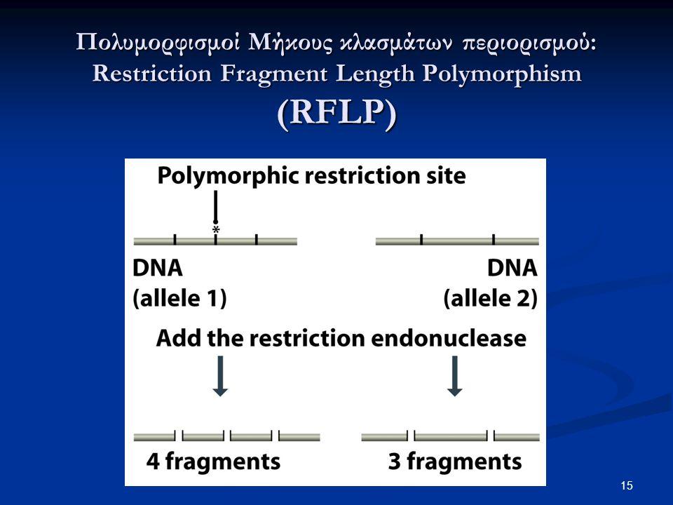 Πολυμορφισμοί Μήκους κλασμάτων περιορισμού: Restriction Fragment Length Polymorphism (RFLP) 15