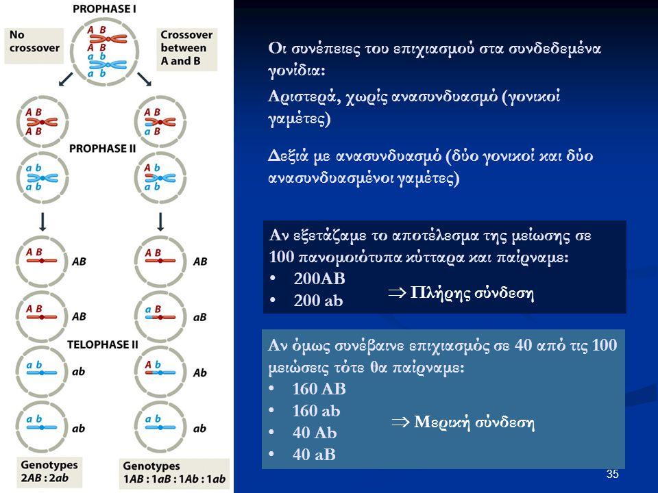 Οι συνέπειες του επιχιασμού στα συνδεδεμένα γονίδια: 35 Αριστερά, χωρίς ανασυνδυασμό (γονικοί γαμέτες) Δεξιά με ανασυνδυασμό (δύο γονικοί και δύο ανασ