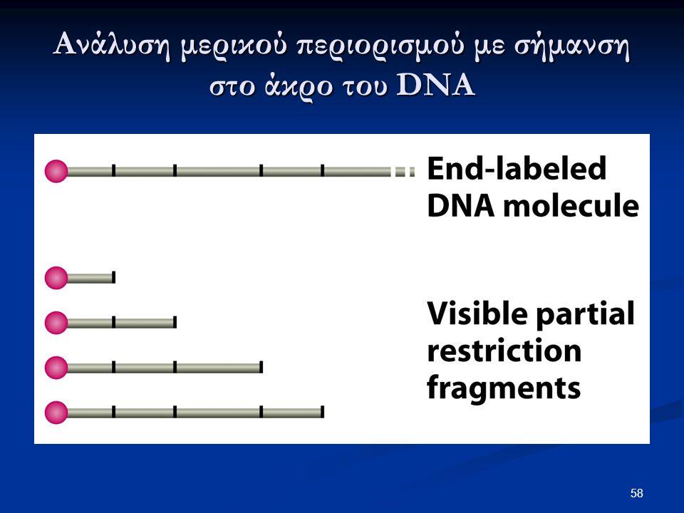 Ανάλυση μερικού περιορισμού με σήμανση στο άκρο του DNA 58