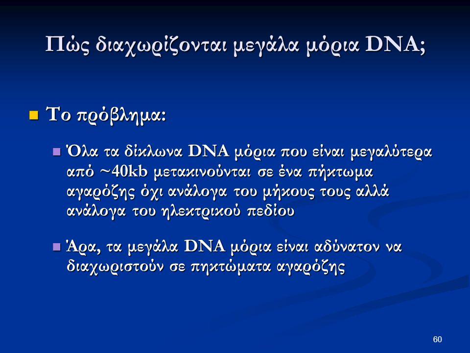 Πώς διαχωρίζονται μεγάλα μόρια DNA; Το πρόβλημα: Το πρόβλημα: Όλα τα δίκλωνα DNA μόρια που είναι μεγαλύτερα από ~40kb μετακινούνται σε ένα πήκτωμα αγα