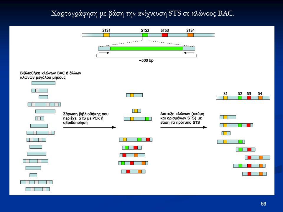 66 Χαρτογράφηση με βάση την ανίχνευση STS σε κλώνους BAC.