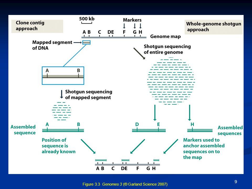 Γενετικοί και φυσικοί χάρτες Γενετική χαρτογράφηση: χάρτες σύνδεσης γονιδίων  σχετική θέση γονιδίων στα χρωμοσώματα Γενετική χαρτογράφηση: χάρτες σύνδεσης γονιδίων  σχετική θέση γονιδίων στα χρωμοσώματα Φυσική χαρτογράφηση: με τεχνικές μοριακής βιολογίας (in situ hybridization) καθορίζεται επακριβώς η φυσική θέση γονιδίων στα χρωμοσώματα Φυσική χαρτογράφηση: με τεχνικές μοριακής βιολογίας (in situ hybridization) καθορίζεται επακριβώς η φυσική θέση γονιδίων στα χρωμοσώματα 10