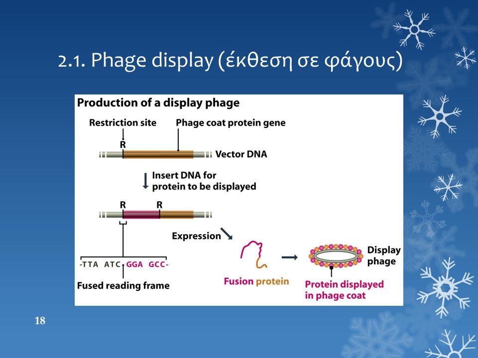 2.1. Phage display (έκθεση σε φάγους) 18