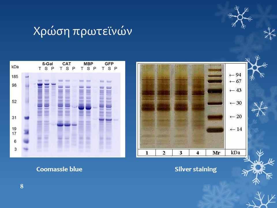 Χρώση πρωτεϊνών Coomassie blue Silver staining 8
