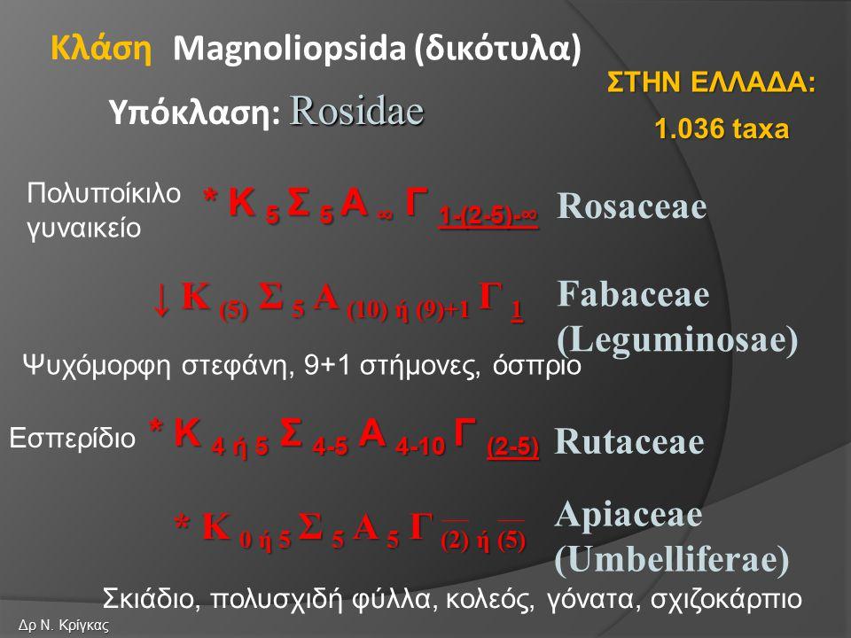 Rosaceae Fabaceae (Leguminosae) Magnoliopsida (δικότυλα) Rosidae Υπόκλαση: Rosidae Κλάση Rutaceae * K 5 Σ 5 A ∞ Γ 1-(2-5)-∞ ↓ Κ (5) Σ 5 Α (10) ή (9)+1