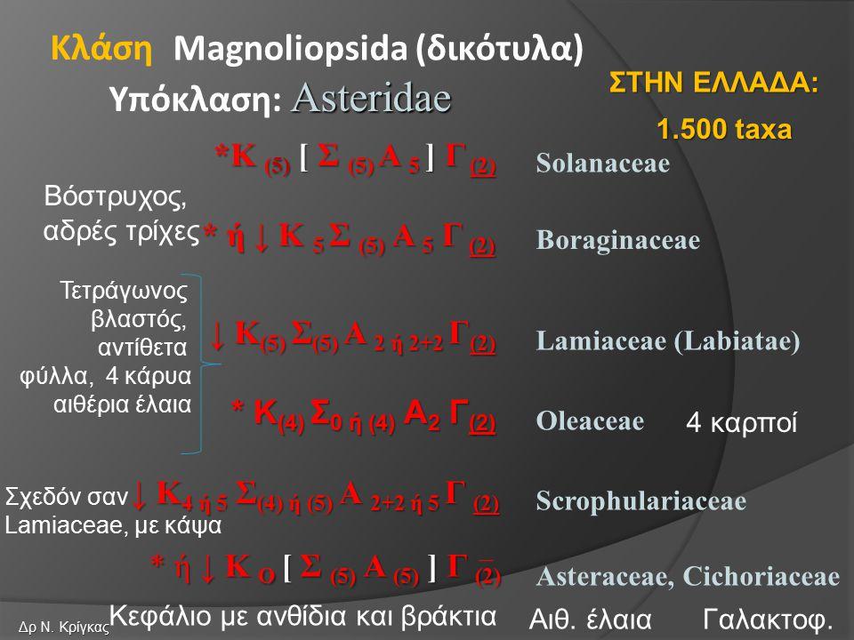 Solanaceae Boraginaceae Magnoliopsida (δικότυλα) Asteridae Υπόκλαση: Asteridae Κλάση Oleaceae *Κ (5) [ Σ (5) Α 5 ] Γ (2) * ή ↓ Κ 5 Σ (5) Α 5 Γ (2) ↓ Κ (5) Σ (5) Α 2 ή 2+2 Γ (2) Lamiaceae (Labiatae) * Κ (4) Σ 0 ή (4) Α 2 Γ (2) Scrophulariaceae ↓ Κ 4 ή 5 Σ (4) ή (5) Α 2+2 ή 5 Γ (2) Asteraceae, Cichoriaceae * ή ↓ Κ Ο [ Σ (5) Α (5) ] Γ (2) 1.500 taxa ΣΤΗΝ ΕΛΛΑΔΑ: Δρ Ν.