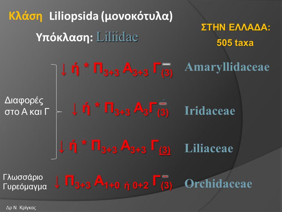 Amaryllidaceae Iridaceae Liliopsida (μονοκότυλα) Liliidae Υπόκλαση: Liliidae Κλάση Liliaceae Orchidaceae ↓ ή * Π 3+3 Α 3+3 Γ (3) ↓ ή * Π 3+3 Α 3 Γ (3) ↓ ή * Π 3+3 Α 3+3 Γ (3) ↓ Π 3+3 Α 1+0 ή 0+2 Γ (3) 505 taxa ΣΤΗΝ ΕΛΛΑΔΑ: Δρ Ν.