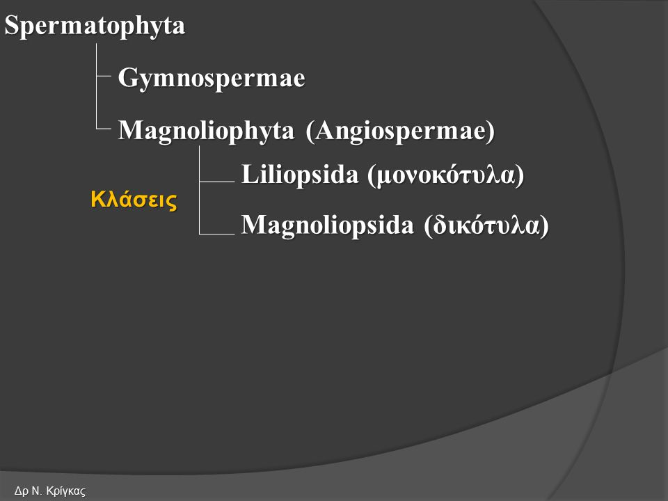 Spermatophyta Gymnospermae Magnoliophyta (Angiospermae) Liliopsida (μονοκότυλα) Magnoliopsida (δικότυλα) Κλάσεις Δρ Ν. Κρίγκας