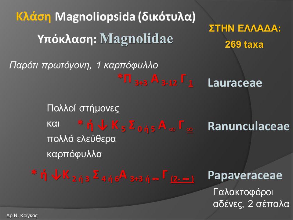 Lauraceae *Π 3+3 Α 3-12 Γ 1 * ή ↓ Κ 5 Σ 0 ή 5 Α  Γ  Ranunculaceae Papaveraceae * ή ↓Κ 2 ή 3 Σ 4 ή 6 Α 3+3 ή ∞ Γ (2- ∞ ) Magnoliopsida (δικότυλα) Magnolidae Υπόκλαση: Magnolidae Κλάση 269 taxa ΣΤΗΝ ΕΛΛΑΔΑ: Δρ Ν.