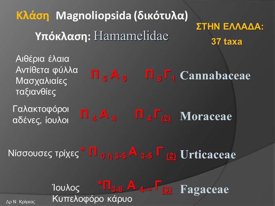 Cannabaceae Moraceae Urticaceae Magnoliopsida (δικότυλα) Hamamelidae Υπόκλαση: Hamamelidae Κλάση Fagaceae Π 5 Α 5 Π 5 Γ 1 Π 4 Α 4 Π 4 Γ (2) * Π 0 ή 3-5 Α 3-5 Γ (2) *Π 3-8 Α 4-∞ Γ (3) 37 taxa ΣΤΗΝ ΕΛΛΑΔΑ: Δρ Ν.