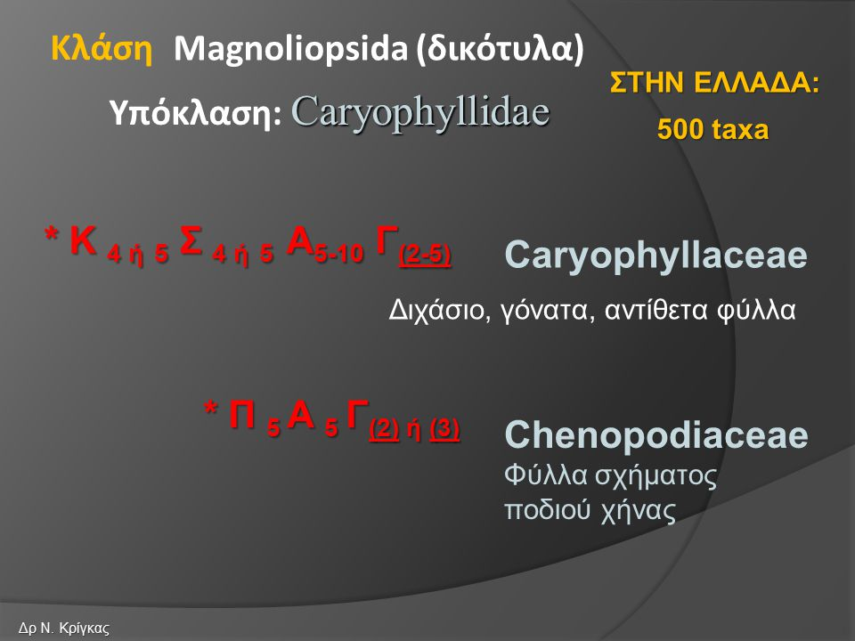 Caryophyllaceae Chenopodiaceae Φύλλα σχήματος ποδιού χήνας Magnoliopsida (δικότυλα) Caryophyllidae Υπόκλαση: Caryophyllidae Κλάση * Π 5 Α 5 Γ (2) ή (3) * Κ 4 ή 5 Σ 4 ή 5 Α 5-10 Γ (2-5) 500 taxa ΣΤΗΝ ΕΛΛΑΔΑ: Δρ Ν.
