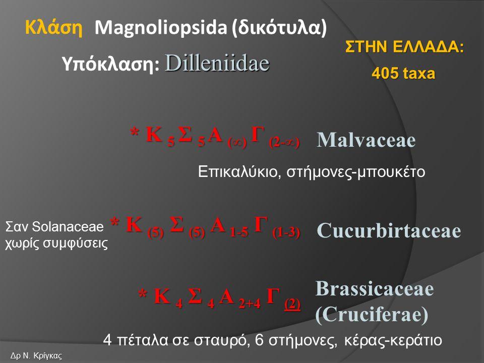 Malvaceae Cucurbirtaceae Magnoliopsida (δικότυλα) Dilleniidae Υπόκλαση: Dilleniidae Κλάση Brassicaceae (Cruciferae) * Κ 5 Σ 5 Α (∞) Γ (2-∞) * Κ (5) Σ