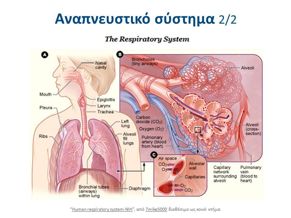 """Αναπνευστικό σύστημα 2/2 """"Human respiratory system-NIH"""", από 7mike5000 διαθέσιμο ως κοινό κτήμαHuman respiratory system-NIH7mike5000"""
