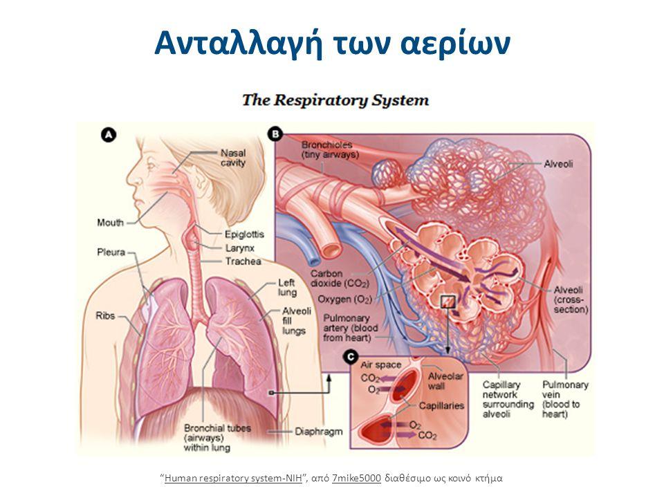 """Ανταλλαγή των αερίων """"Human respiratory system-NIH"""", από 7mike5000 διαθέσιμο ως κοινό κτήμαHuman respiratory system-NIH7mike5000"""