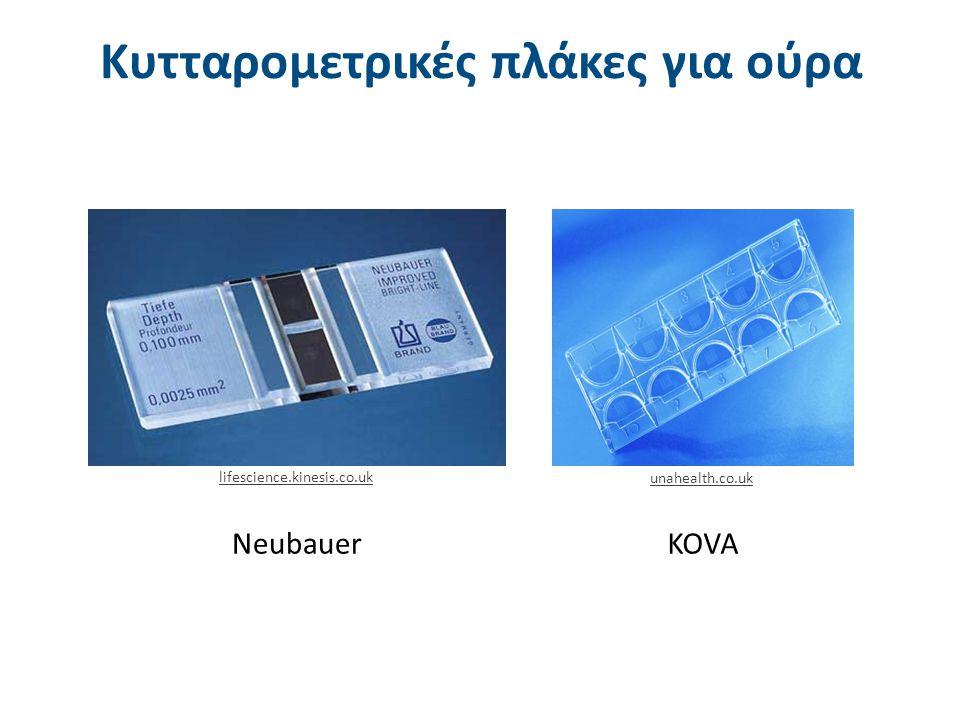 Νeubauer Κυτταρομετρικές πλάκες για ούρα lifescience.kinesis.co.uk unahealth.co.uk KOVA