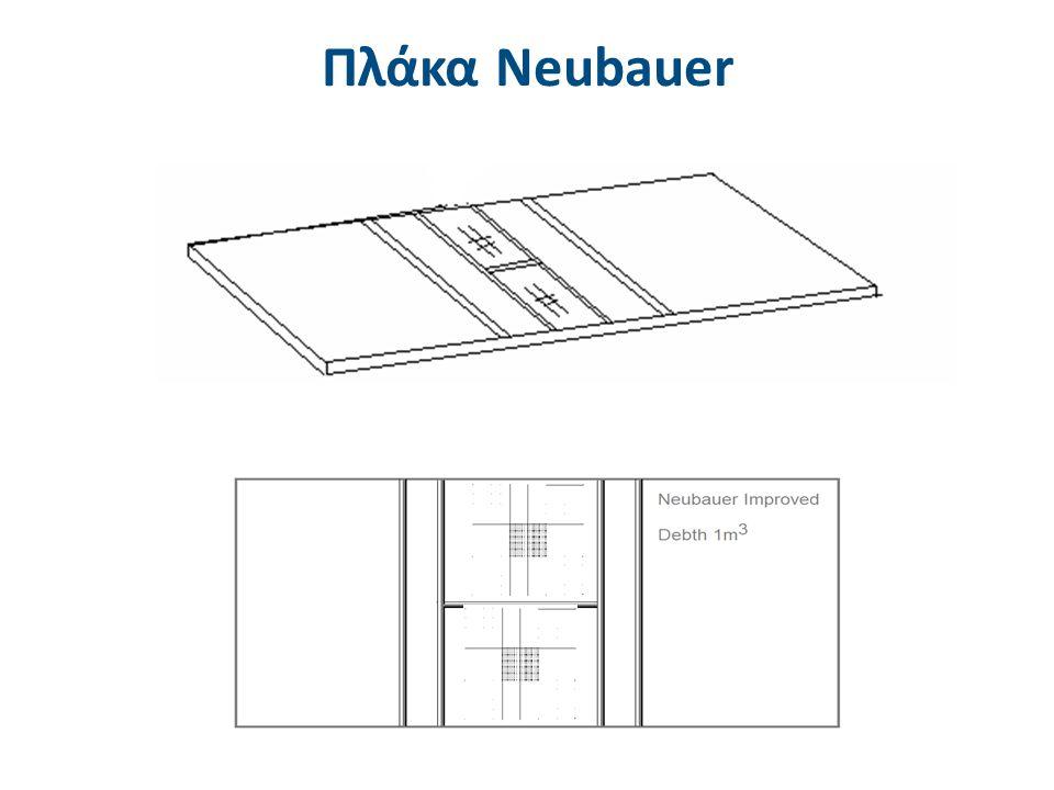 Πλάκα Νeubauer