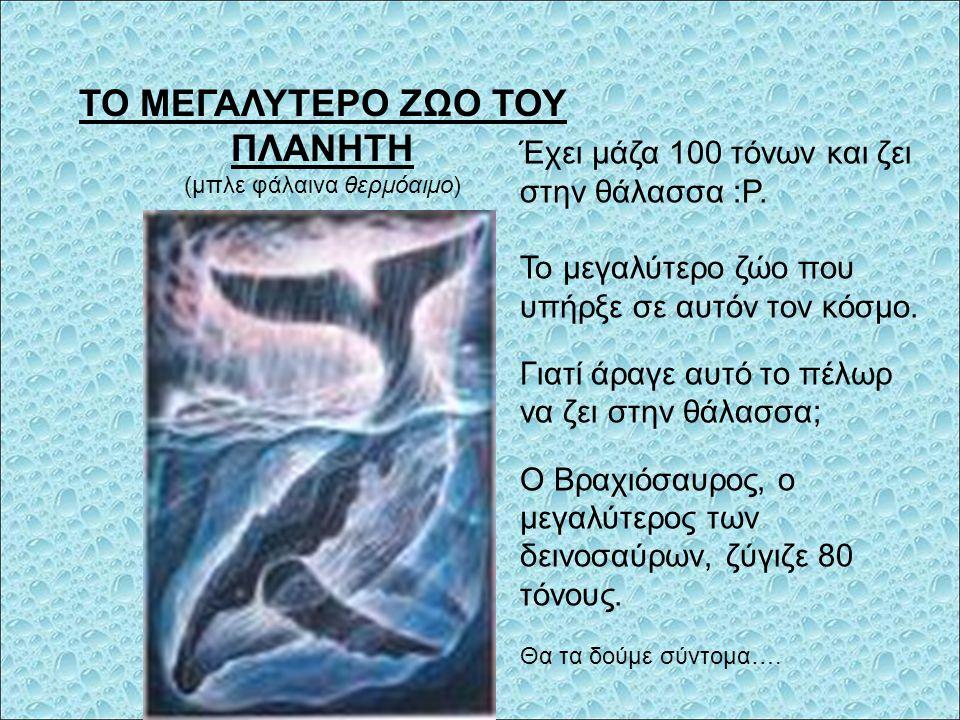 ΤΟ ΜΕΓΑΛΥΤΕΡΟ ΖΩΟ ΤΟΥ ΠΛΑΝΗΤΗ (μπλε φάλαινα θερμόαιμο) Έχει μάζα 100 τόνων και ζει στην θάλασσα :Ρ.