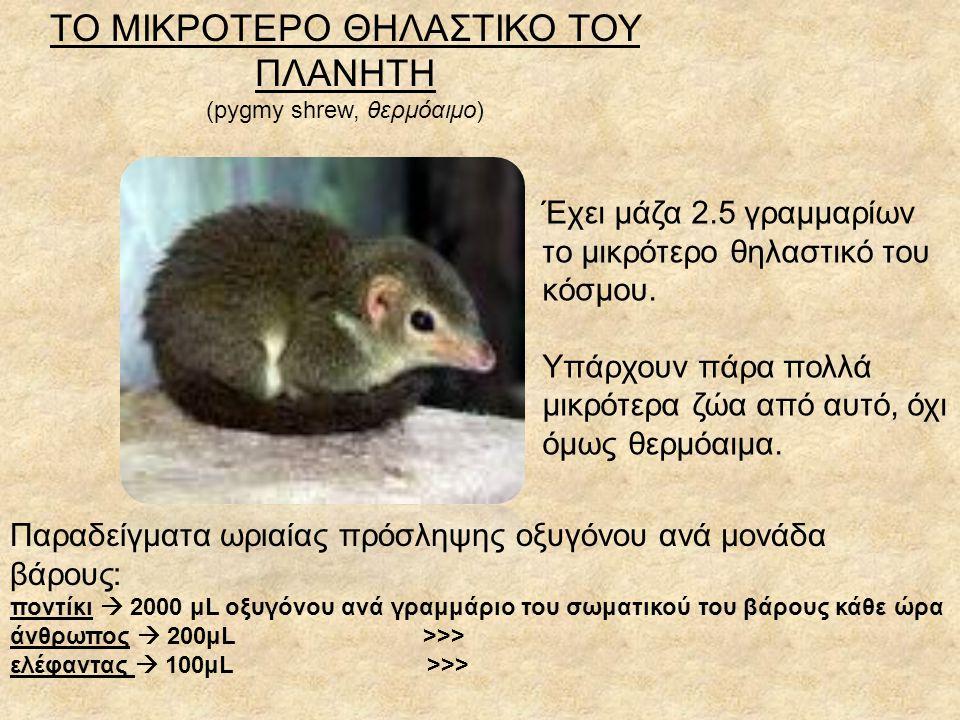 ΤΟ ΜΙΚΡΟΤΕΡΟ ΘΗΛΑΣΤΙΚΟ ΤΟΥ ΠΛΑΝΗΤΗ (pygmy shrew, θερμόαιμο) Έχει μάζα 2.5 γραμμαρίων το μικρότερο θηλαστικό του κόσμου.