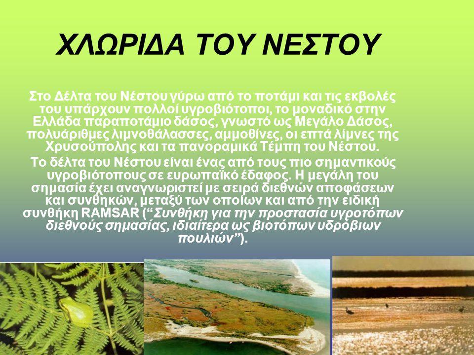 ΧΛΩΡΙΔΑ ΤΟΥ ΝΕΣΤΟΥ Στο Δέλτα του Νέστου γύρω από το ποτάμι και τις εκβολές του υπάρχουν πολλοί υγροβιότοποι, το μοναδικό στην Ελλάδα παραποτάμιο δάσος