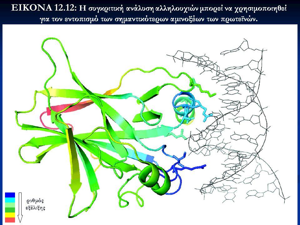 55 ΕΙΚΟΝΑ 12.12: ΕΙΚΟΝΑ 12.12: Η συγκριτική ανάλυση αλληλουχιών μπορεί να χρησιμοποιηθεί για τον εντοπισμό των σημαντικότερων αμινοξέων των πρωτεϊνών.