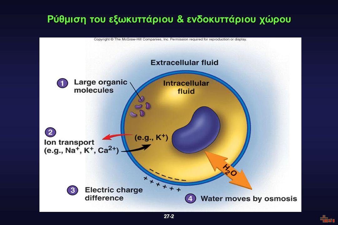 27-2 Ρύθμιση του εξωκυττάριου & ενδοκυττάριου χώρου