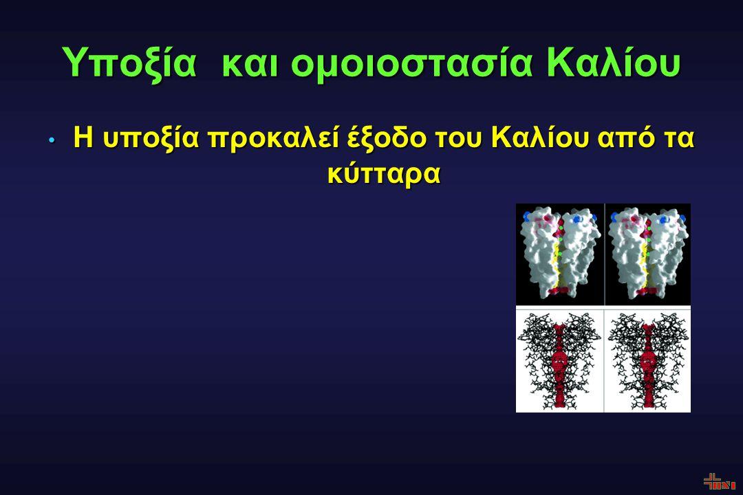Υποξία και ομοιοστασία Καλίου Η υποξία προκαλεί έξοδο του Καλίου από τα κύτταρα Η υποξία προκαλεί έξοδο του Καλίου από τα κύτταρα