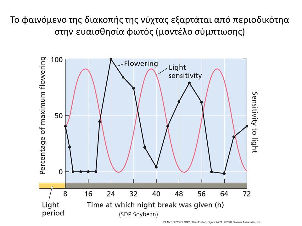 (SDP Soybean) Το φαινόμενο της διακοπής της νύχτας εξαρτάται από περιοδικότηα στην ευαισθησία φωτός (μοντέλο σύμπτωσης)