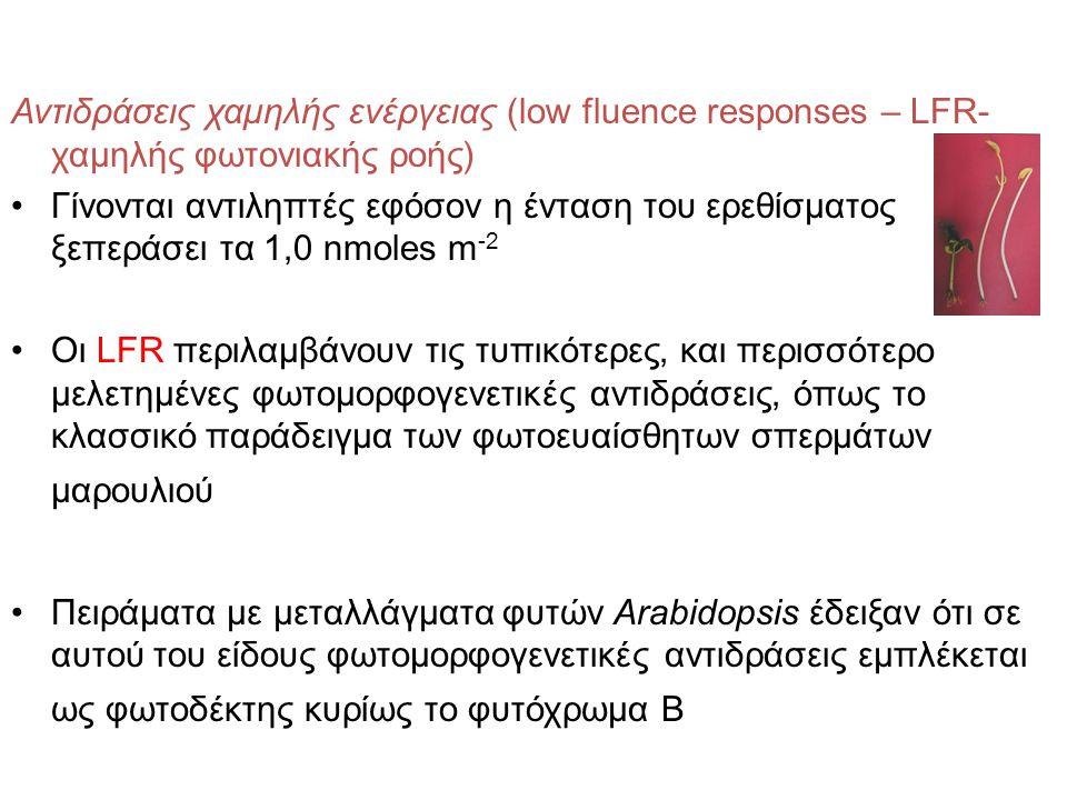 Αντιδράσεις χαμηλής ενέργειας (low fluence responses – LFR- χαμηλής φωτονιακής ροής) Γίνονται αντιληπτές εφόσον η ένταση του ερεθίσματος ξεπεράσει τα