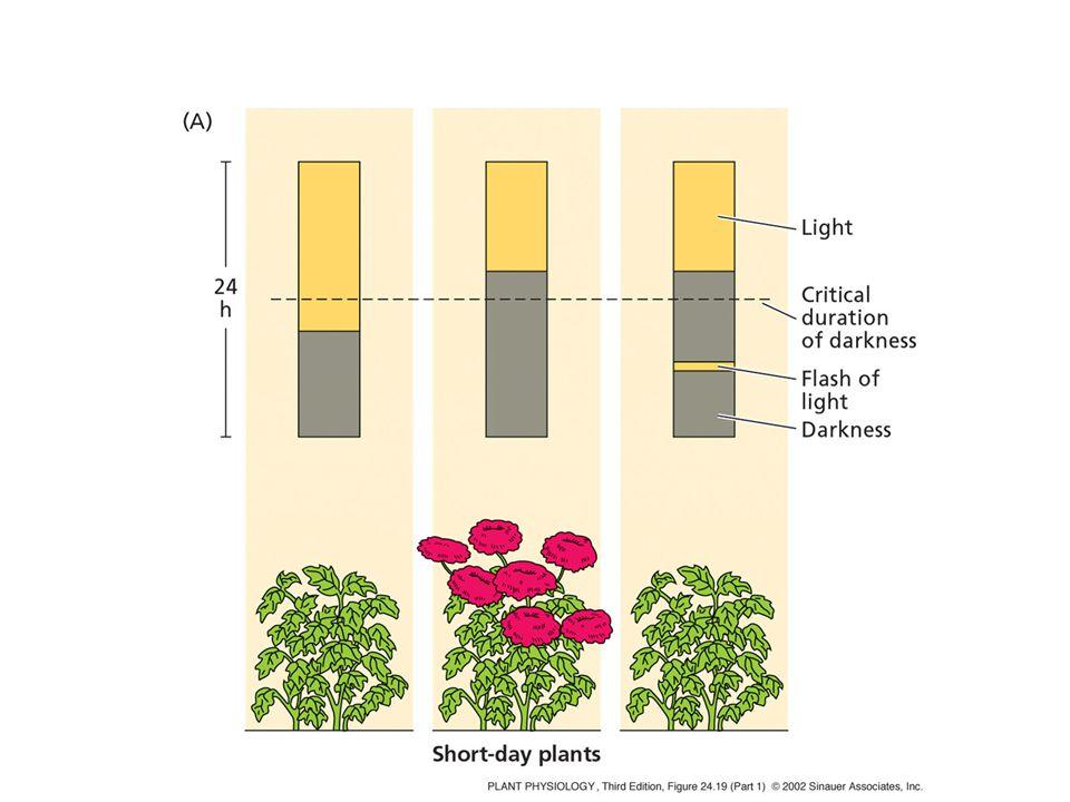 Διάκριση δράσεων φυτοχρώματος με βάση την απαιτούμενη ποσότητα φωτός  Πολύ χαμηλής φωτονιακής ροής (VLFR: very low fluence response)  Xαμηλής φωτονιακής ροής (LFR: low fluence response)  Yψηλής έντασης ακτινοβολίας (HIR: high-irradiance response)