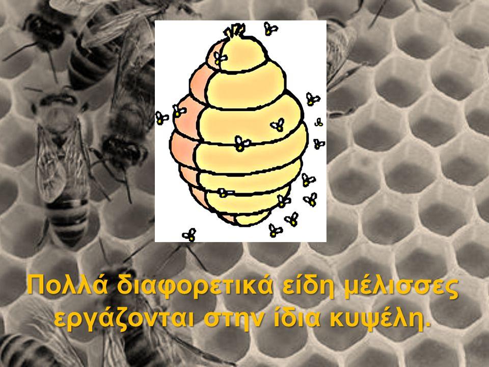 Οι μέλισσες είναι φτιαγμένες για να φτιάχνουν το μέλι: Έχουν: ειδικό στομάχι ειδική γλώσσα κεντρί ένζυμα