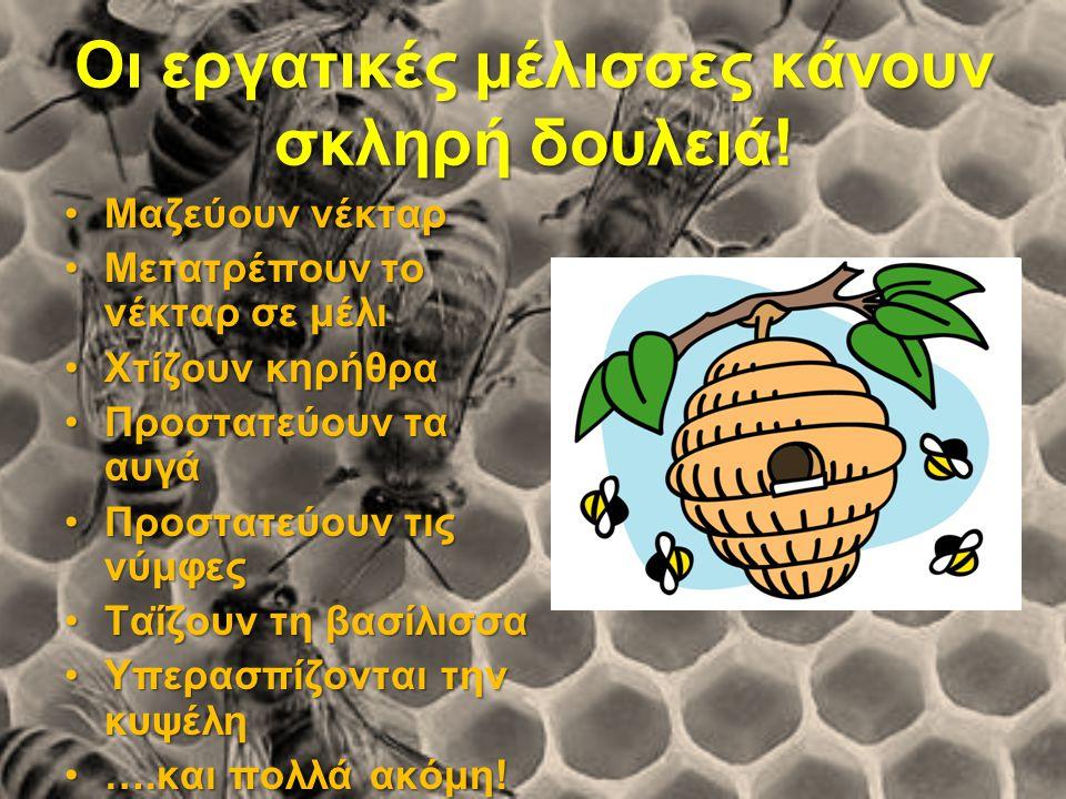 Οι εργατικές μέλισσες κάνουν σκληρή δουλειά! Μαζεύουν νέκταρΜαζεύουν νέκταρ Μετατρέπουν το νέκταρ σε μέλιΜετατρέπουν το νέκταρ σε μέλι Χτίζουν κηρήθρα