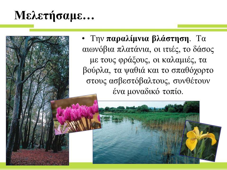 Μελετήσαμε… Την παραλίμνια βλάστηση.