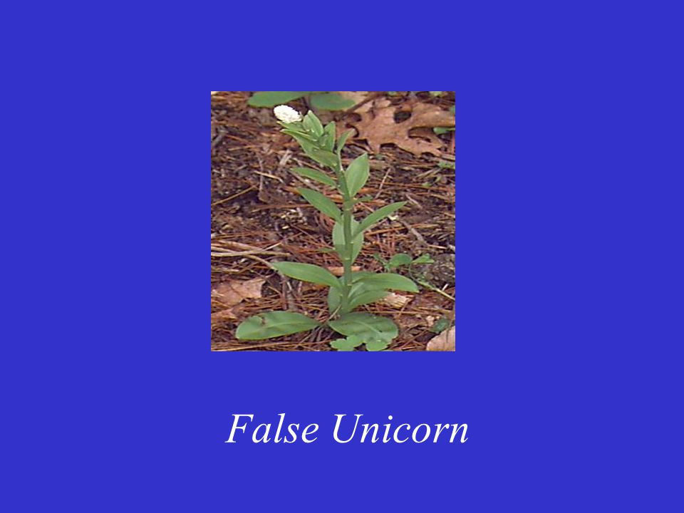 False Unicorn