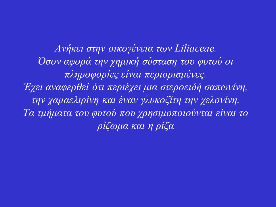 Ανήκει στην οικογένεια των Liliaceae.