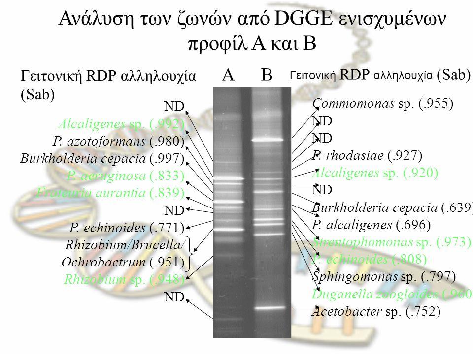 Ανάλυση των ζωνών από DGGE ενισχυμένων προφίλ A και B AB ND Alcaligenes sp. (.992) P. azotoformans (.980) Burkholderia cepacia (.997) P. aeruginosa (.