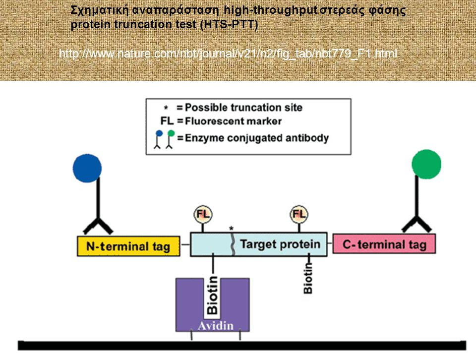 Σχηματική αναπαράσταση high-throughput στερεάς φάσης protein truncation test (HTS-PTT) http://www.nature.com/nbt/journal/v21/n2/fig_tab/nbt779_F1.html
