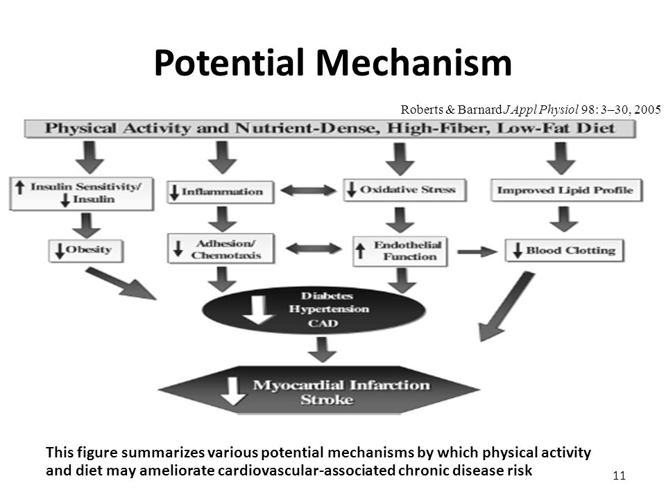 Potential Mechanism 11 Roberts & Barnard J Appl Physiol 98: 3–30, 2005 This figure summarizes various potential mechanisms by which physical activity and diet may ameliorate cardiovascular-associated chronic disease risk