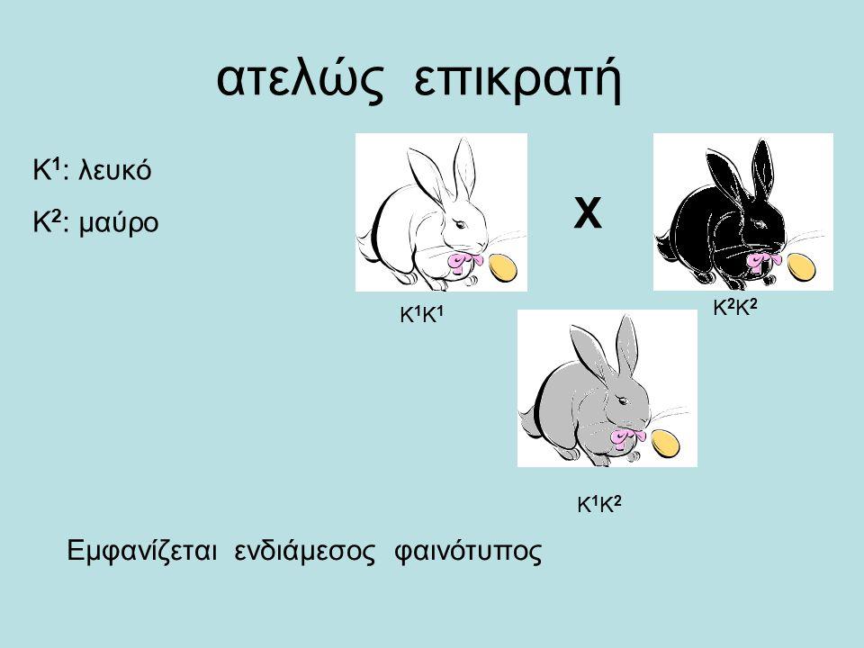 ατελώς επικρατή X Κ1Κ1Κ1Κ1 Κ1Κ2Κ1Κ2 Κ2Κ2Κ2Κ2 Κ 1 : λευκό Κ 2 : μαύρο Εμφανίζεται ενδιάμεσος φαινότυπος