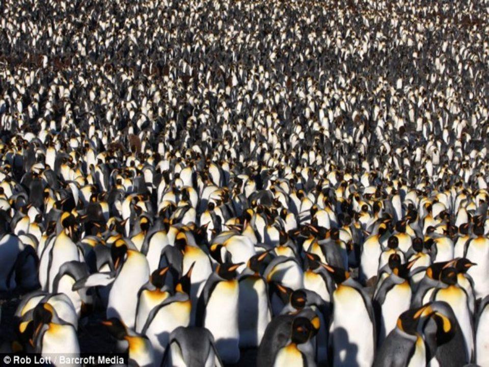 Ζώα Ανταρκτικής  Μπλε φάλαινα  Όρκα  Ωταρία  Φώκια λεοπάρδαλη  Κριλ  σκνίπα  πιγκουίνος  παγόψαρο  φώκια