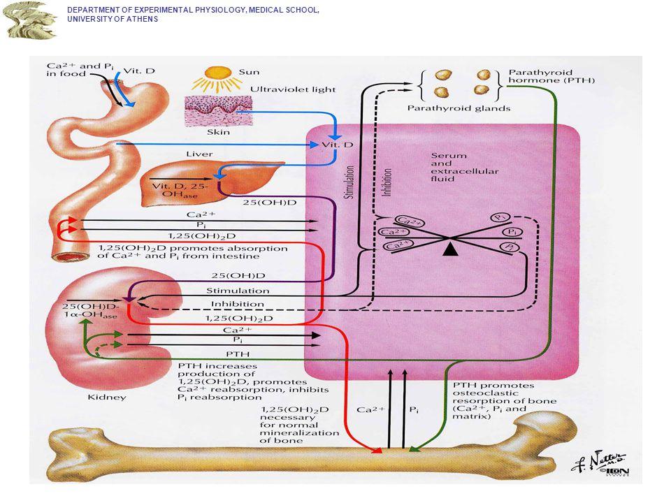 Δομή υποδοχέα ασβεστίου: ιδιαίτερες περιοχές & μετα- μεταφραστικές μεταβολές του μορίου