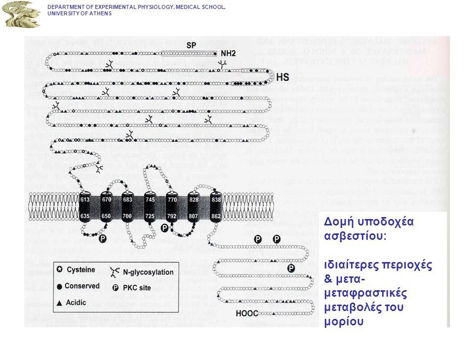 DEPARTMENT OF EXPERIMENTAL PHYSIOLOGY, MEDICAL SCHOOL, UNIVERSITY OF ATHENS Σχηματική παρουσίαση των δράσεων της 1,25 (OH)2 Vit D3 στα κύτταρα στόχους.