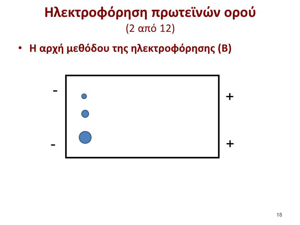Ηλεκτροφόρηση πρωτεϊνών ορού (2 από 12) Η αρχή μεθόδου της ηλεκτροφόρησης (Β) 18