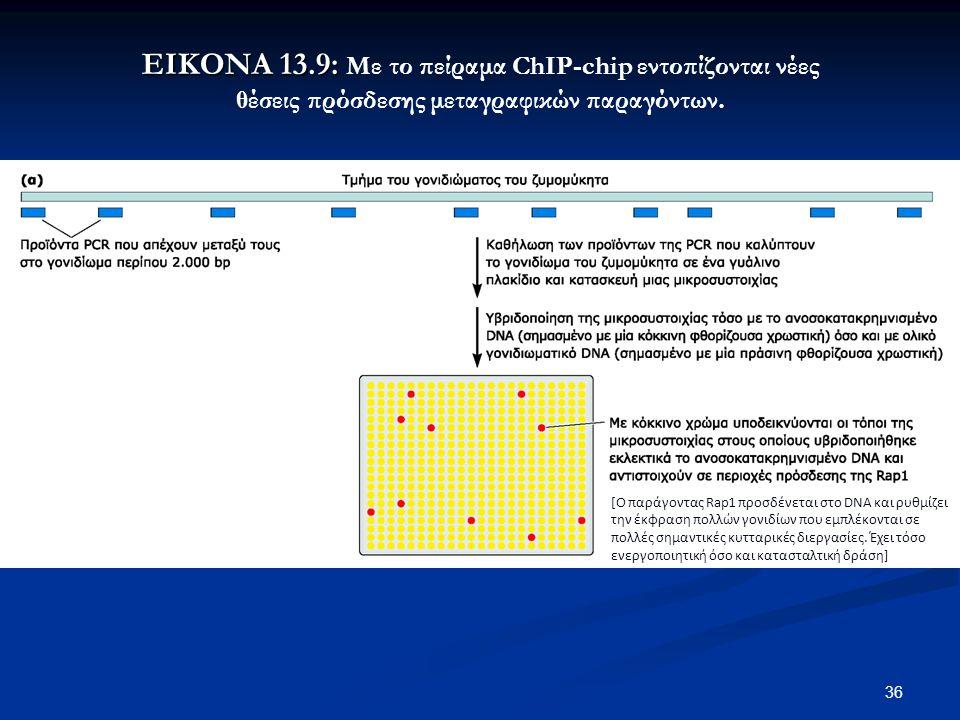 36 ΕΙΚΟΝΑ 13.9: ΕΙΚΟΝΑ 13.9: Με το πείραμα ChIP-chip εντοπίζονται νέες θέσεις πρόσδεσης μεταγραφικών παραγόντων. [Ο παράγοντας Rap1 προσδένεται στο DN