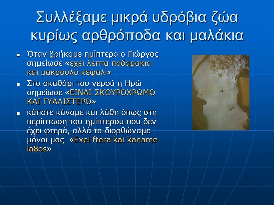 Συλλέξαμε μικρά υδρόβια ζώα κυρίως αρθρόποδα και μαλάκια Όταν βρήκαμε ημίπτερο ο Γιώργος σημείωσε «εχει λεπτα ποδαρακια και μακρουλο κεφαλι» Όταν βρήκαμε ημίπτερο ο Γιώργος σημείωσε «εχει λεπτα ποδαρακια και μακρουλο κεφαλι» Στο σκαθάρι του νερού η Ηρώ σημείωσε «ΕΙΝΑΙ ΣΚΟΥΡΟΧΡΩΜΟ ΚΑΙ ΓΥΑΛΙΣΤΕΡΟ» Στο σκαθάρι του νερού η Ηρώ σημείωσε «ΕΙΝΑΙ ΣΚΟΥΡΟΧΡΩΜΟ ΚΑΙ ΓΥΑΛΙΣΤΕΡΟ» κάποτε κάναμε και λάθη όπως στη περίπτωση του ημίπτερου που δεν έχει φτερά, αλλά τα διορθώναμε μόνοι μας «Exei ftera kai kaname la8os» κάποτε κάναμε και λάθη όπως στη περίπτωση του ημίπτερου που δεν έχει φτερά, αλλά τα διορθώναμε μόνοι μας «Exei ftera kai kaname la8os»