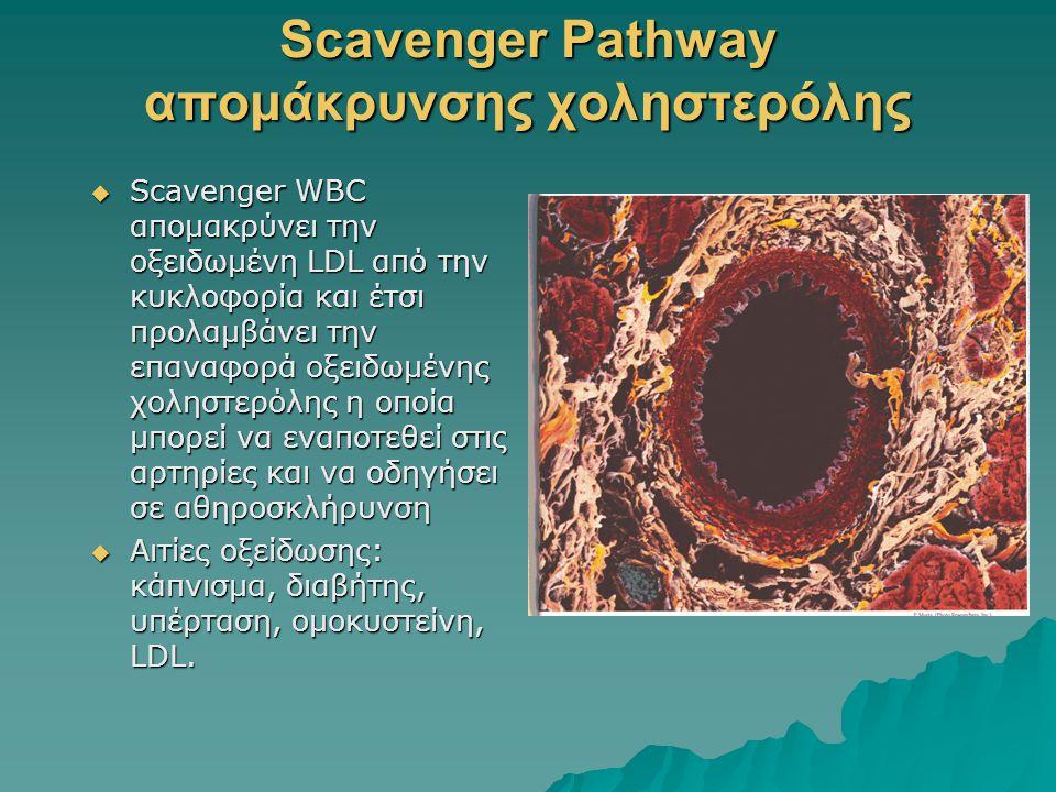 Scavenger Pathway απομάκρυνσης χοληστερόλης  Scavenger WBC απομακρύνει την οξειδωμένη LDL από την κυκλοφορία και έτσι προλαμβάνει την επαναφορά οξειδ