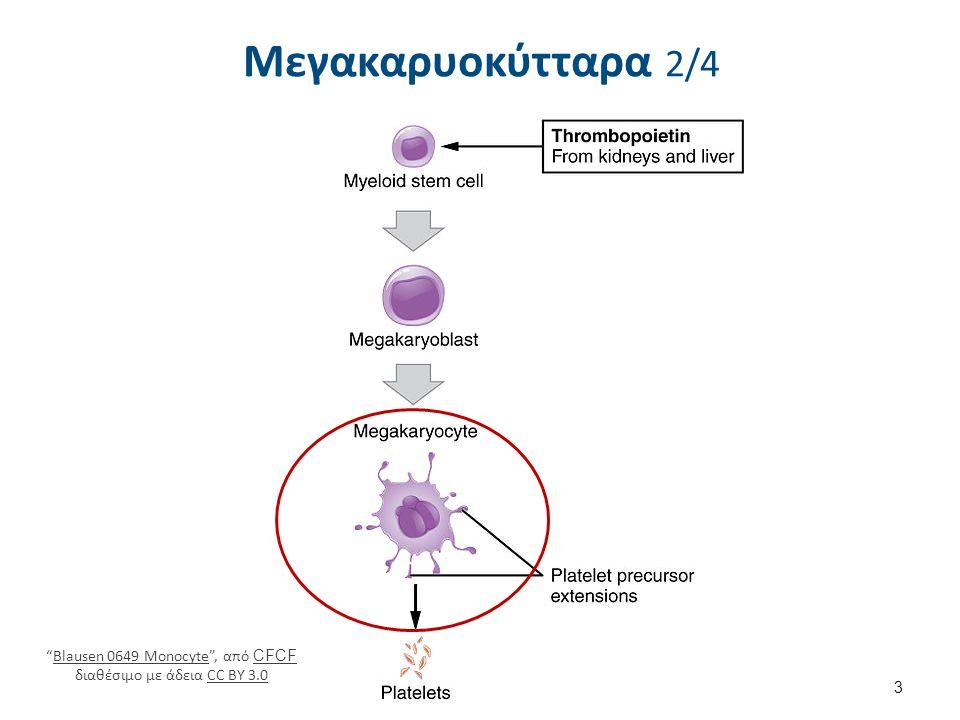 """Μεγακαρυοκύτταρα 2/4 """"Blausen 0649 Monocyte"""", από CFCF διαθέσιμο με άδεια CC BY 3.0Blausen 0649 Monocyte CFCFCC BY 3.0 3"""