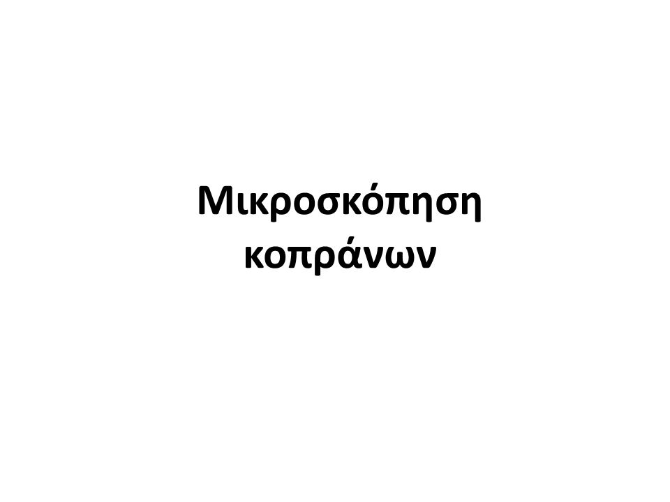 Enterobius vermicularis 19 Oxyuris vermicularis , από Citron διαθέσιμο ως κοινό κτήμαOxyuris vermicularisCitron Eggs of Enterobius vermicularis 5229 lores , από Patho διαθέσιμο ως κοινό κτήμαEggs of Enterobius vermicularis 5229 lores Patho